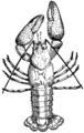 Crawfish (PSF).png