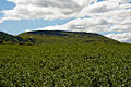 Cringle Moor from Bank Lane.jpg
