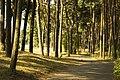 Curonian Spit Nida - panoramio (1).jpg