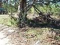 Cypress FL Norton House site06.jpg