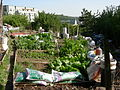 Danny Woo Community Garden 12.jpg