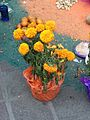 Day of the Dead Coyoacan 2014 - 170.jpg
