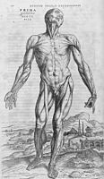 De humani corporis fabrica (27).jpg