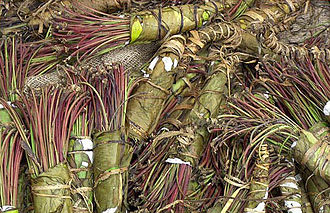 Khat - Bundles of khat, seized by the DEA in July 2006