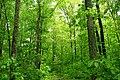 Deep Woods (8847022426).jpg