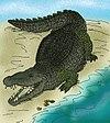 Deinosuchus hatcheri.JPG