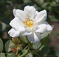 Denver Botanic Gardens (181025841).jpg