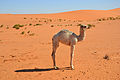Desert (6486209601).jpg