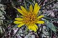 Desert flora of the Moab, Utah area (16060426225).jpg
