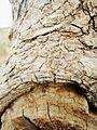 Detailed tree.jpg