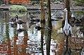 Dierenpark Emmen Reflection of a bird (10930393624).jpg