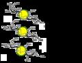 Disaccharides (Lactose, Maltose, and Sucrose).png