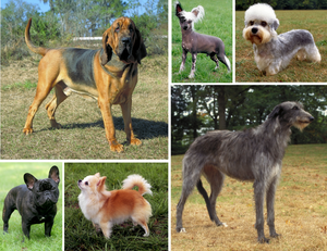 27c51bad Dogs show great morphological variation