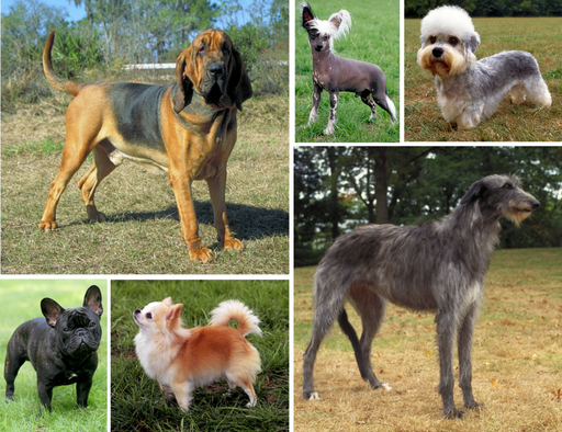 Dog morphological variation