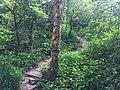 Doi Suthep Monk Trail 1.jpg