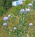 Dolomites - Cortina area - (11059115516).jpg