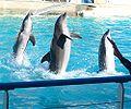 Dolphin-intelligence.jpg