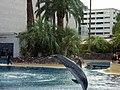 Dolphins (7980824564).jpg