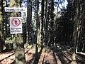 Downhill Strecke am Giersberg.jpg