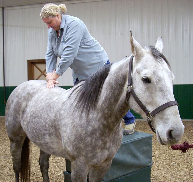 File:Dr. Heidi Bockhold Adjusts Horse.jpg