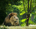 Druid Hill lion.jpg
