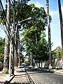 Duong Huyen Tran Cong Chua q1 hcmvn - panoramio.jpg