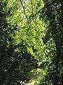 ELLENFÉNYBEN - panoramio - encsere.jpg