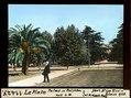 ETH-BIB-La Plata, Palme mit Früchten mit L.W.-Dia 247-11427.tif