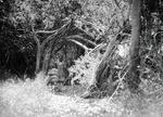 ETH-BIB-Mann in Wald-Kilimanjaroflug 1929-30-LBS MH02-07-0280.tif
