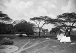 ETH-BIB-Zelte im Camp Serengeti-Kilimanjaroflug 1929-30-LBS MH02-07-0501.tif