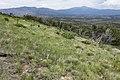 East-northeast of Cat Mountain - Flickr - aspidoscelis.jpg