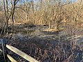 East Branch Brandywine Creek from the Struble Trail.jpg