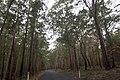 East Lynne NSW 2536, Australia - panoramio (1).jpg