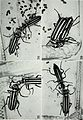 Ecology, behavior, and adult anatomy of the Albida Group of the genus Epicauta (Coleoptera, Meloidae) (1969) (21120925256).jpg