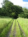 Edge of wood, Great Ridge near Chicklade 3 - geograph.org.uk - 469751.jpg