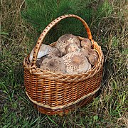 Edible fungi in basket 2020 G3.jpg