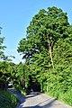 Eichgraben - Naturdenkmal PL-128 - Annenhofallee.jpg