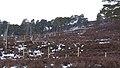 Electric Fence (An Sgòr Dubh) on Mar Lodge Estate (02APR13) (6).jpg