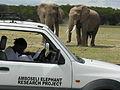 Elephant Study 2 (6987533977).jpg