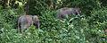 Elephants-1 by Joseph Lazer.jpg