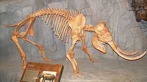 Dwarf elephant - Elephas falconeri skeleton cast