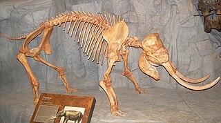 Dwarf elephant Prehistoric elephant species