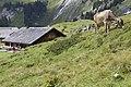 Engstlenalp, Switzerland - panoramio (18).jpg