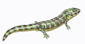 Enosuchus - Image: Enosuchus 1DB