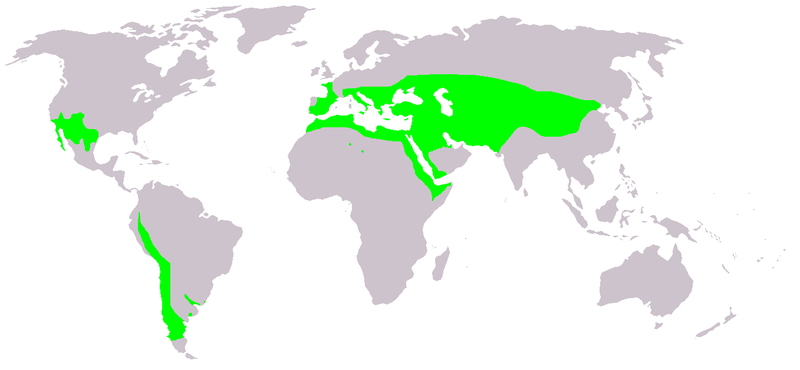 Ephedra distribution.PNG
