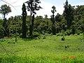 Esperança - A 10m. do Jardim Botânico do Bom Sucesso - panoramio.jpg