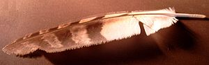 part of same Feather