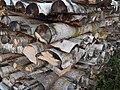 European White Birch Firewood.JPG