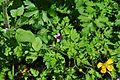 Evans Creek Preserve - 088 - bee in flower (26796147014).jpg