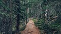 Evergreen (Unsplash).jpg